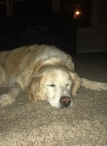 Sleepy doggo!